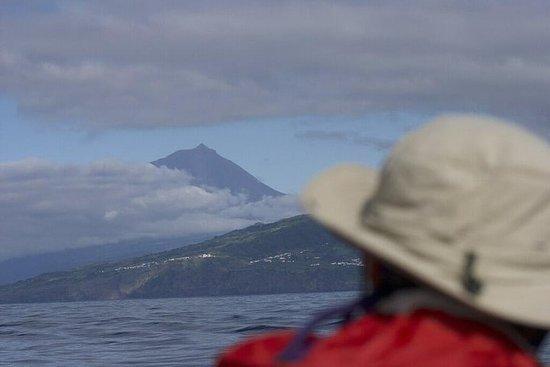 Hval og delfin ser på Pico Island