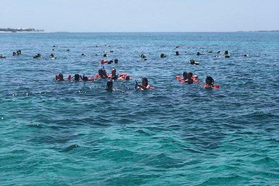 Zwem met de schildpadden van Green ...