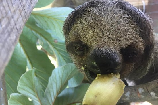 Roatan Shore Excursion: Monkeys...