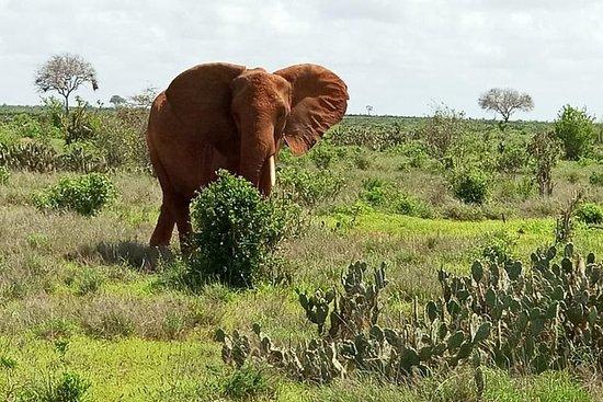 1-daagse Tsavo East Safari (minimaal ...