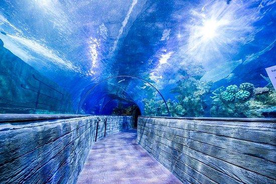 Malta National Aquarium Entrance...