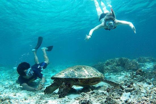 Snorkling med skildpadder på Gili Trawangan