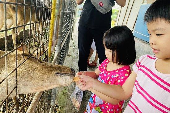 Johor Day Tour Fra Singapore - Lasertag, Eco Farm, Go Kart [Car]