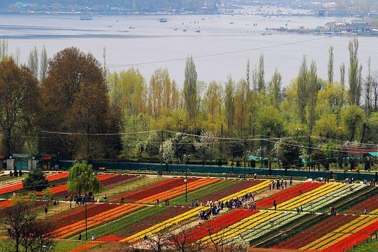 Forfait Tulip Garden Kashmir 4 nuits...