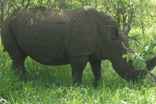 Game drive e short rhino walk
