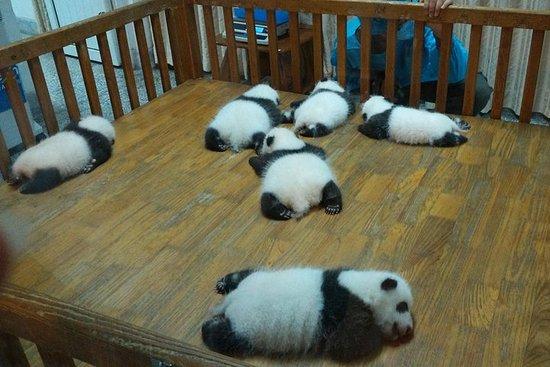 Expérience privée à Chengdu: les...