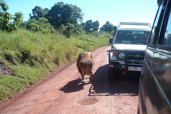 TANZANIA-OPPLEVELSE; 4 dager...