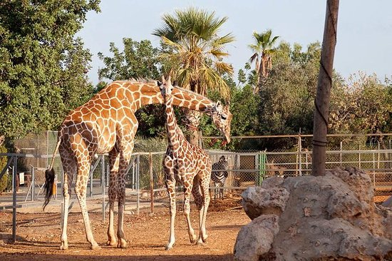 Skip the Line: Paphos Zoo (Tickets...