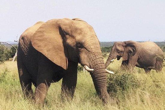 Economische 1-daagse Kruger Safari ...