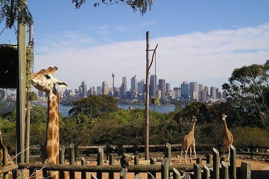 Excursão de animais australianos no...