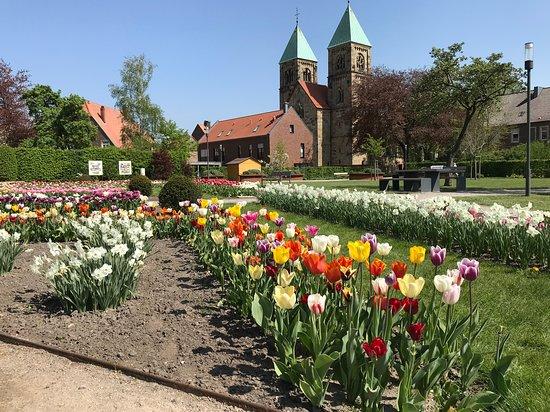 Legden, גרמניה: Im Frühjahr gibt es Tulpen im Dahliengarten in Legden.