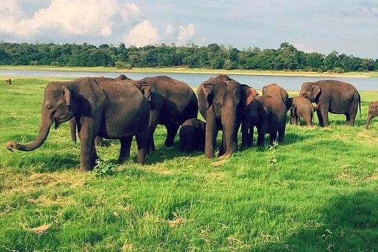Yala, Udawalawe Safaritouren