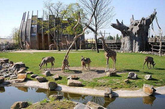 Rotterdam Zoo Diergaarde Blijdorp...