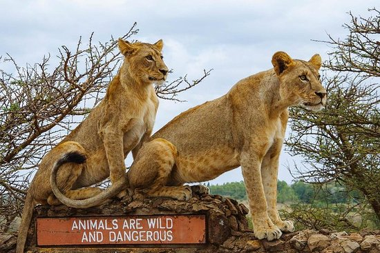 Ảnh về Nairobi National Park half day Excursion using safari 4x4 vehicle