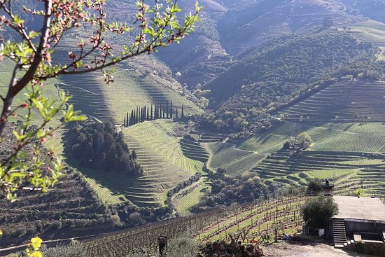 Douro Valley Premium Tour | IT WILL...
