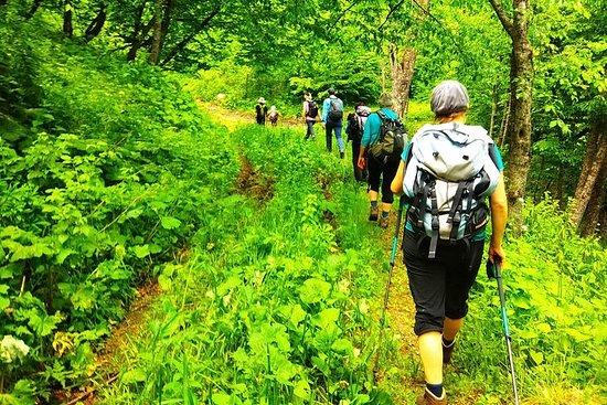 在帝力贊國家公園放鬆徒步