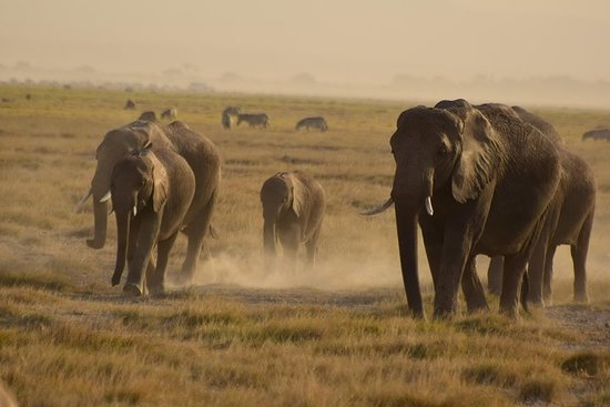 3 Days 2 Nights Amboseli National Park – fotografia