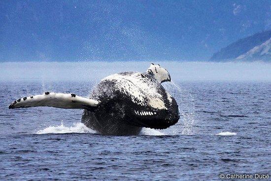 Crociera di avvistamento di balene da