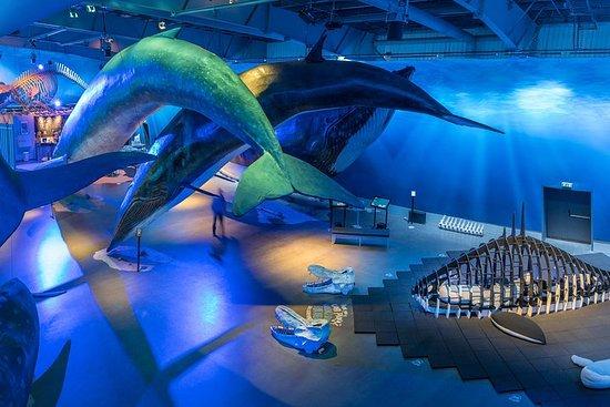 Eintritt für Whales of Iceland