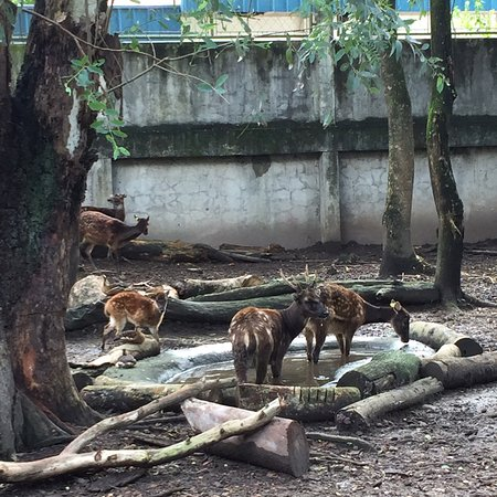 My husband and I loved this small park. Considering the small area, we think that the animals had enough space for themselves to move around. It was raining a bit so the cats hid inside their enclosure. We would definitely visit again!