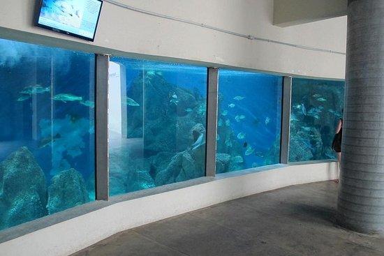 Billet d'entrée à l'aquarium de Paranagua