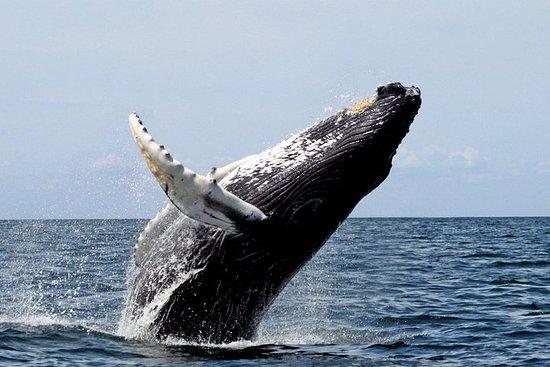 全日私人海角鯨魚和鯨魚