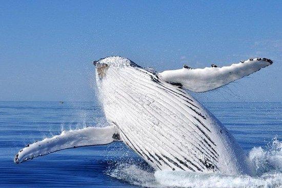 Whale Watching Busselton saliendo...