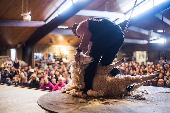 Spectacle de moutons à l'Agrodome et...