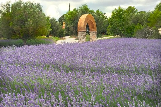 Visita guiada al Jardín Botánico de...