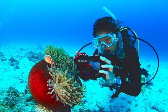 【Okinawa / Kerama】 Mergulho divertido 3 mergulhos! Aluguel gratuito...
