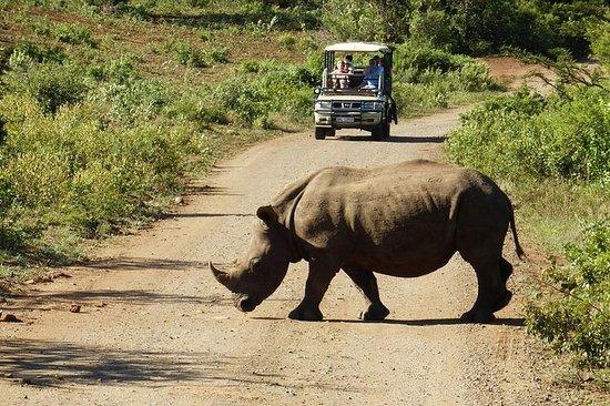 2-dagers dyreliv og Safari Small Group Tour fra Cape Town
