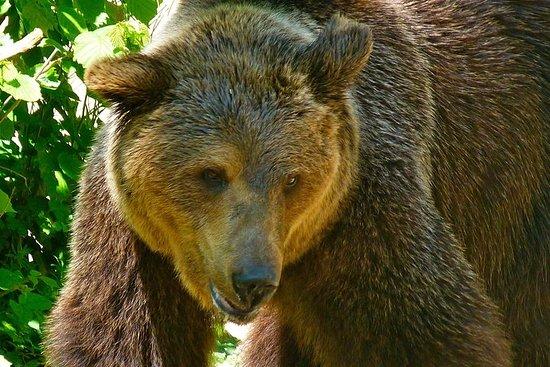 Private Bears & Castles in Transylvania...
