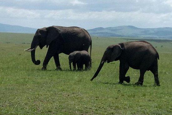 Safari avventuroso in Kenya per 5 giorni