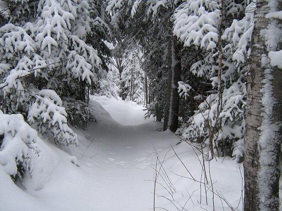 Club de ski de fond Le Norvégien