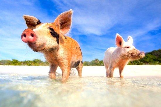 Grand Bahama Pig Beach Ferry con...