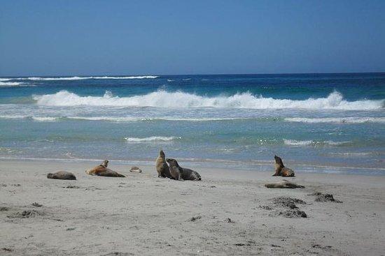 袋鼠島在阿德萊德一日遊