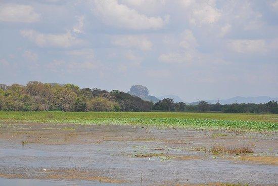 Sigiriya Rock and Countryside from...