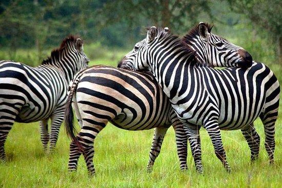 Uganda Safari 2 Days Adventure to ...