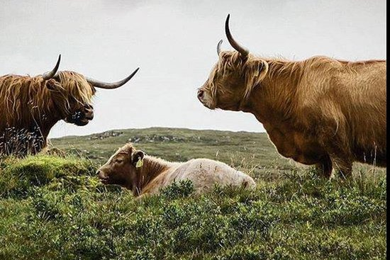 Highlands + Glencoe + Loch Ness Tour...