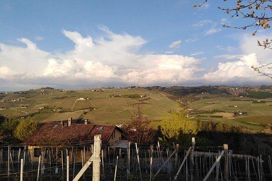 Langa essens - besøg vinmarkerne...