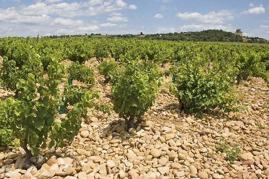 Privat Rhône-dalen vin tur fra Avignon: Chateauneuf-du-Pape og Tavel