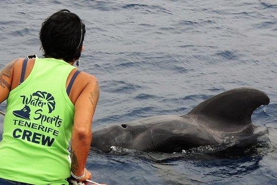 SEA SHEPHERDとのコラボレーション2時間のクジラとイルカの追跡や嫌…