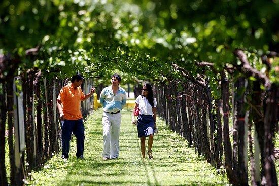 Degustação privada de vinhos e...