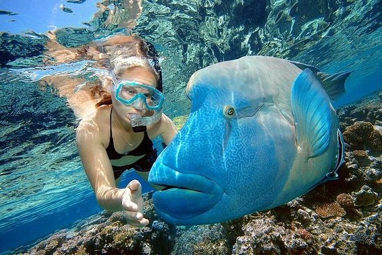 Giftun Island Snorkeling Sea Trip...