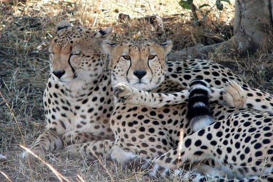 3 Dias Masai Mara Camping Safari