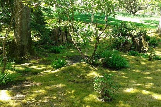 Riserva naturale dell'isola di Bainbridge A piedi con pranzo