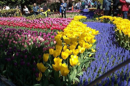 Festival dei tulipani e Tour della Valle di Skagit