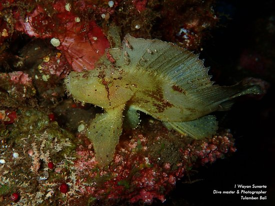 The critters the most what you will see at Tulamben Bali. If you love underwater photography, Tulamben have many dive spots for muck dive and very easy to entry from the shore side in each spot.  Have a look at our packages and you are also can discuss to suit your diving holiday needs. tourdivebali.com/package info@tourdivebali.com