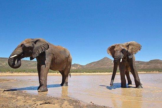 1 dag Big 5 Safari