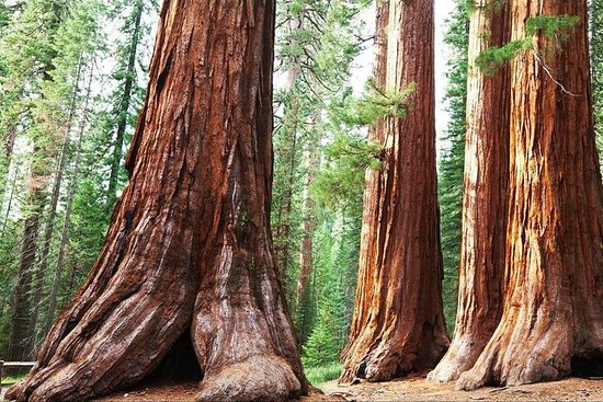 Tour privato del Sequoia Park